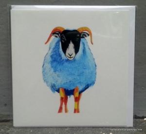 Blackfaced Sheep